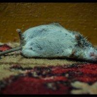 Это сделал кот!!! :: Марина Евсюкова