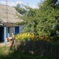 В деревне :: VLADIMIR KIEV