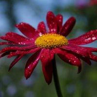 После дождя :: татьяна соловьёва