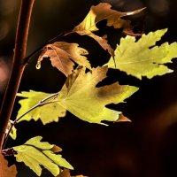 yapraklar :: Selman Şentürk