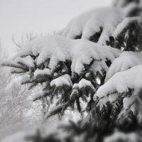 похолодало... :: Maxxx©