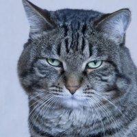 Очень важный кот) :: Алина Красова