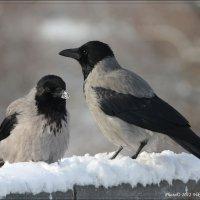 `Глупая! Не ешь снег!`  :-)) :: Виктор Марченко