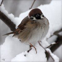 Холодно... :: Виктор Марченко