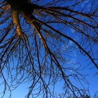 Sky and tree :: Natalie Osipovа