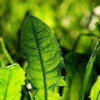 Травы :: павел Труханов