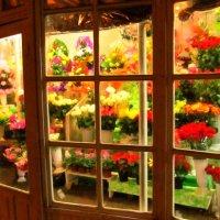 Цвет ... цвет :: AV Odessa