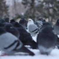 Белая ворона :: Екатерина Тарасова
