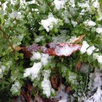 первый снег :: Виталина Хуст