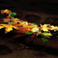 Моя любимая осень 3 :: Анастасия Сергеевна