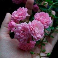 Flowers :: nastic87 M