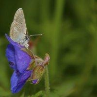 Бабочка :: Алексей Южаков
