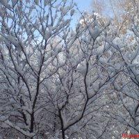 Причуды уральской весны :: Александр Липовецкий