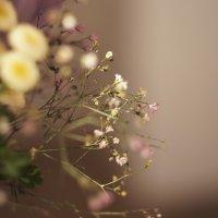 цветы :: Дмитрий Тырышкин
