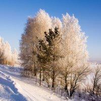 Вдоль дороги :: Виктор Ковчин