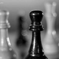 Шахматы :: Roman Osokin