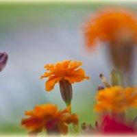 Цветы :: Александр Пахомов