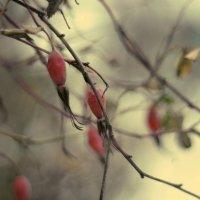Осень :: Марьяна Медичи