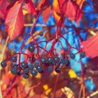 Яркие краски в нашей жизни... :: Photographer MarKo