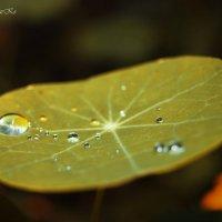 А за окном тихонько плачет осень... :: Photographer MarKo