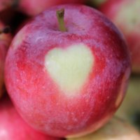 яблоко с сердцем :: Наталья Зиброва