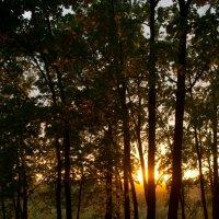 сказочный лес :: linara khis