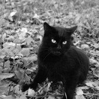 black cat :: Anastasia GangLiON