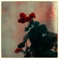 Цветы за окном :: Игорь Банников