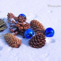 Зимний сад :: Photographer MarKo