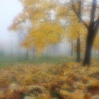 Туманное утро :: Roman Osokin