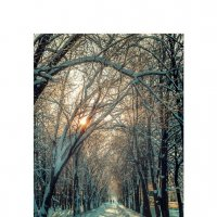 Мороз и солнце... :: алексей афанасьев