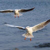 Азовские чайки :: Виктор Марченко