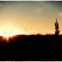 Последний закат :: Андрей Кравец