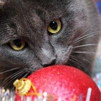 Котище-серый хвостище :: Анастасия Скворцова