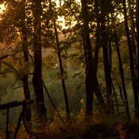 загадочный лес :: linara khis