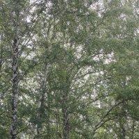 Ветер на люпиновой поляне :: Наталья Золотых-Сибирская