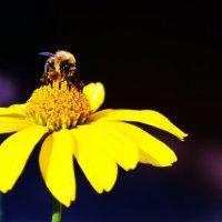 Пчёлка :: Екатерина Мартынова
