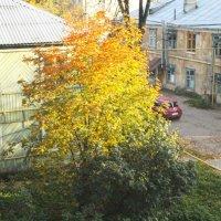 Вид из окна) :: Мария Андреева