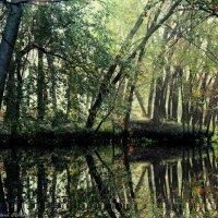 Тихо в лесу :: Юрий Федоров