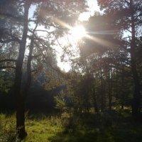 Солнце :: Pasha V
