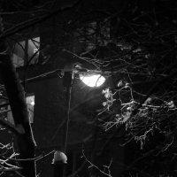 Снег идет :: Елена Казакевич