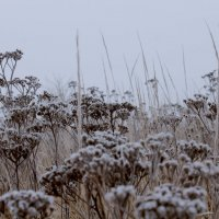 почти зима......... :: татьяна соловьёва