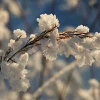 Зима наворожила. :: Анна Тихомирова