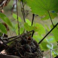 Birds :: Dinar Shartdinov