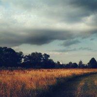 Дорога в поле :: Марьяна Медичи