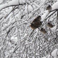 холодно :: Александр Беляков