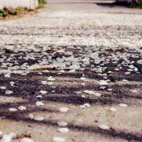 Дорога усыпанная лепестками :: Анжелика Судникова