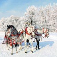 Эх, три белых коня - декабрь, январь и февраль :: Игорь Дворецкий