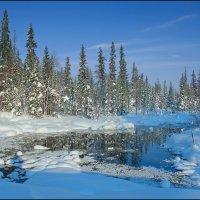 Смотрелись ёлки в озеро лесное :: ALexey Sol
