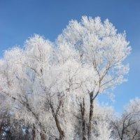 Зимняя :: Лена Реснянская